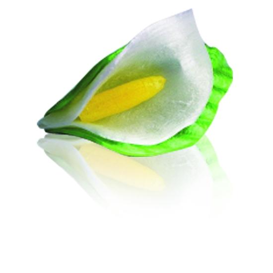18 Arums sucre tiré avec Feuilles collées