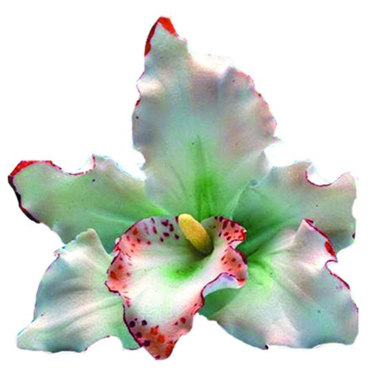 Orchidée - la pièce